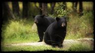 Cubs.png