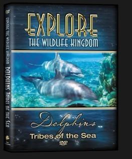 DVD-Dolphins-3D.jpg