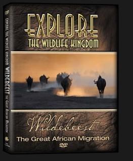 DVD-Wildebeest-3D.jpg