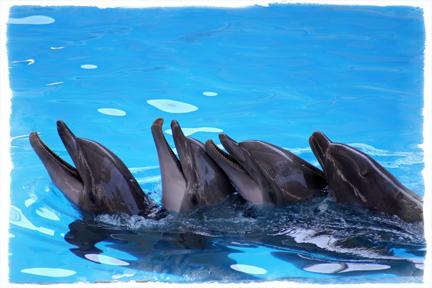 DolphinBack